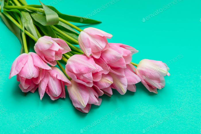 Springtime, easter. Pink tulips on green background, top view, copy space
