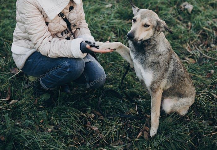 Niedlicher grauer Hund mit lustigen Emotionen im Park geben Pfote an Besitzer