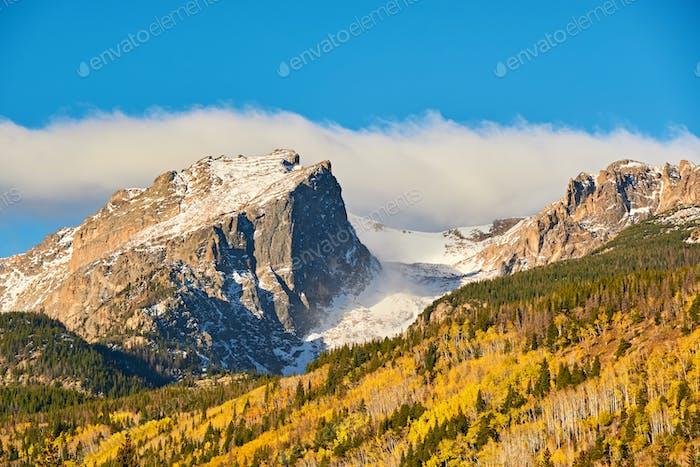 Aspen Grove en otoño en las Montañas Rocosas