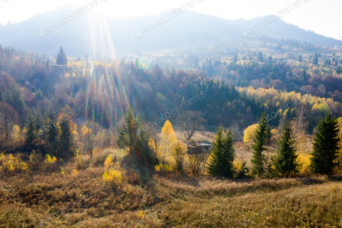 Autumn foliage in the mountains.