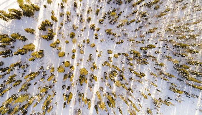 Aerial view of snow covered trees in the park