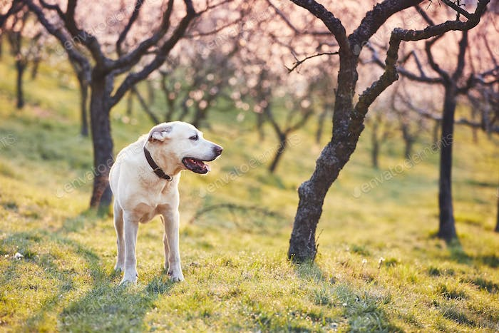 Dog in spring nature