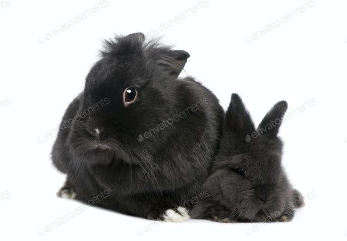 mother Rabbit and his child