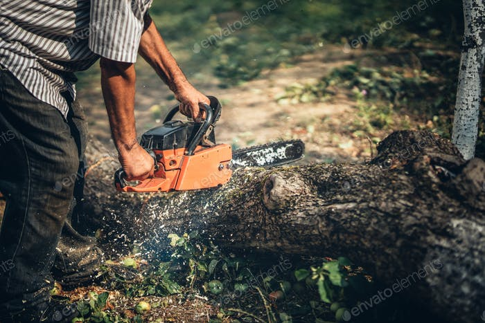 Male lumberjack cutting fire wood using professional chainsaw