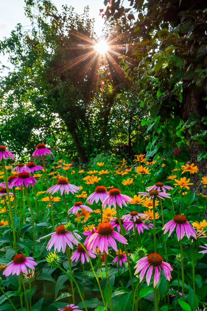 Sunset with beautiful flowers in the garden
