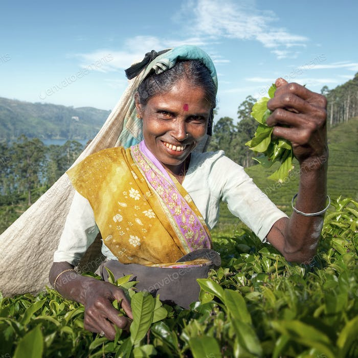 Indigenious Sri Lankan Tea Picker Character Concept