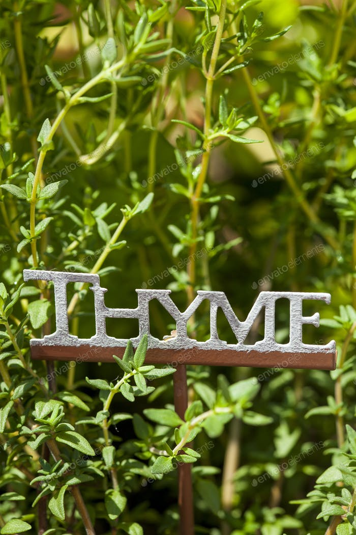 Fresh Green Herbal Thyme Leaves