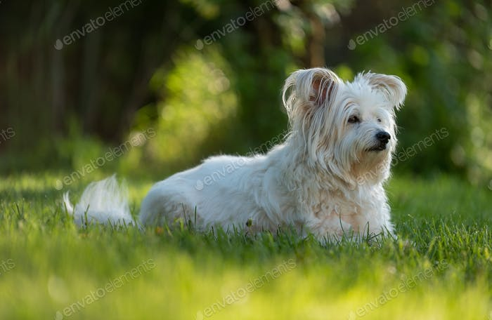Dog among the grass in spring time