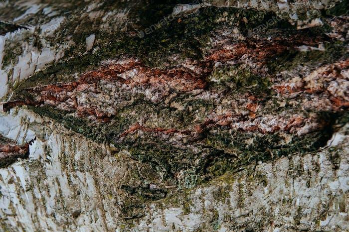 Hintergrund Textur der Birkenrinde