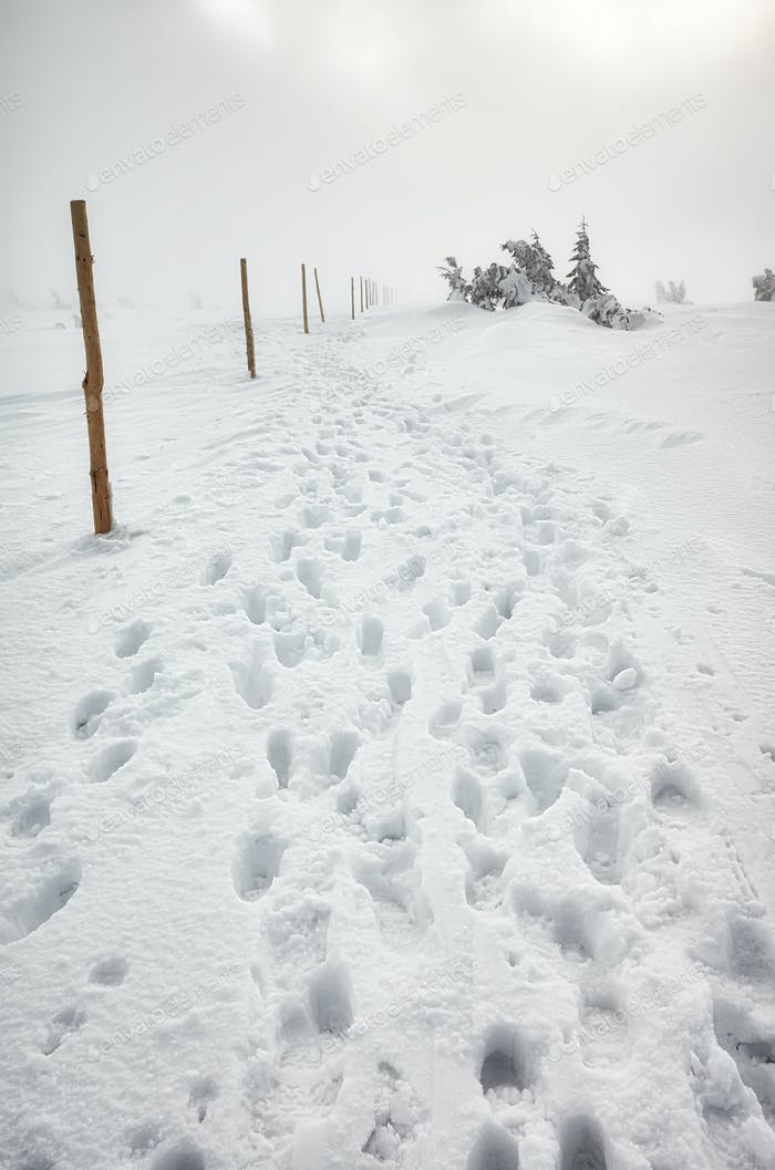 Blizzard in Karkonosze mountains, winter landscape.
