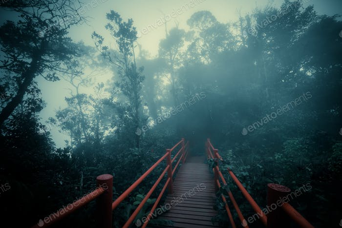 Mysterious landscape of foggy forest with wooden bridge