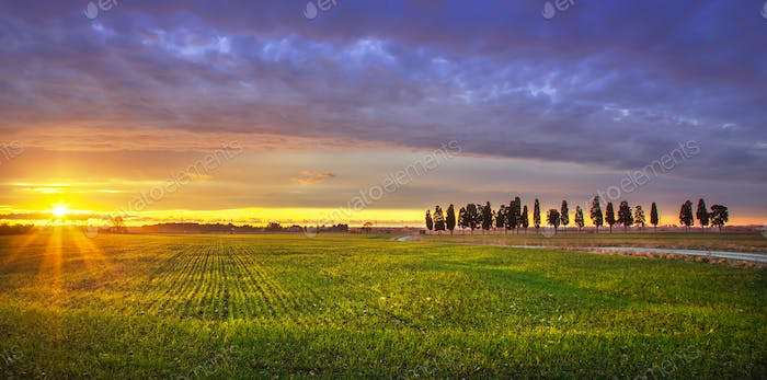 Sunset landscape in Maremma. Rural road and cypress trees. Tusca