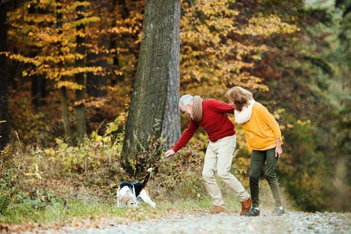 Ein älteres Paar mit einem Hund auf einem Spaziergang in einer Herbstnatur.