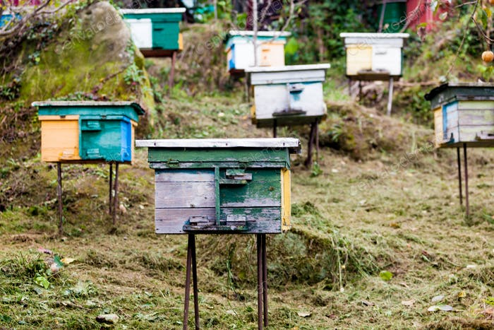 beehives in the middle of a meadow. Hives of bees in the apiary,