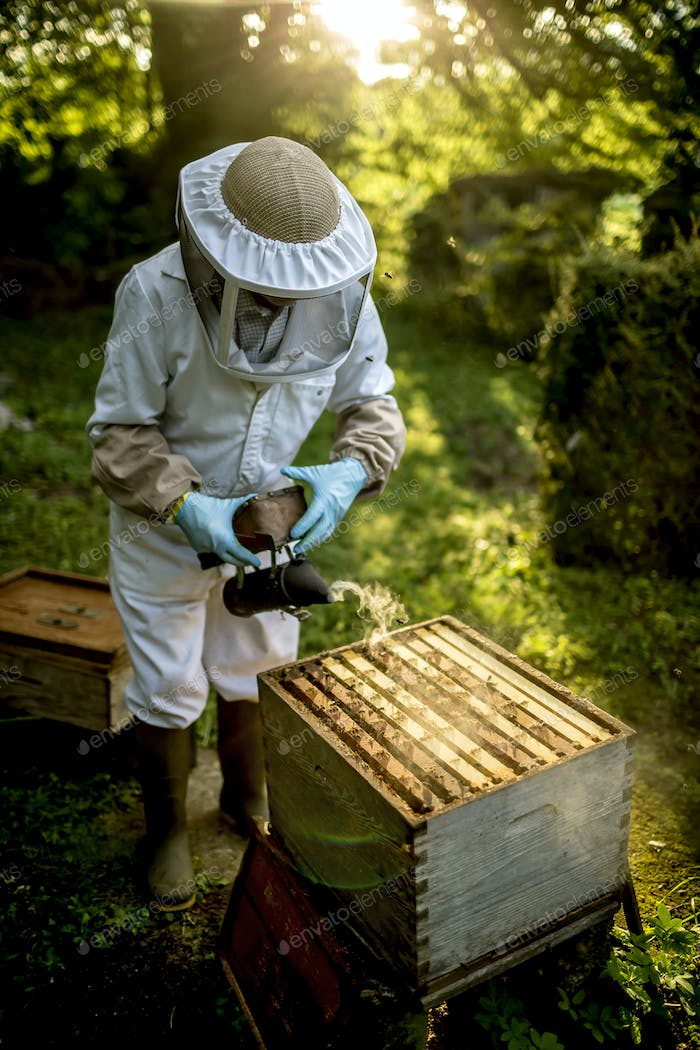 Beekeeper wearing veil standing holding a smoker over an open beehive to calm honeybees before