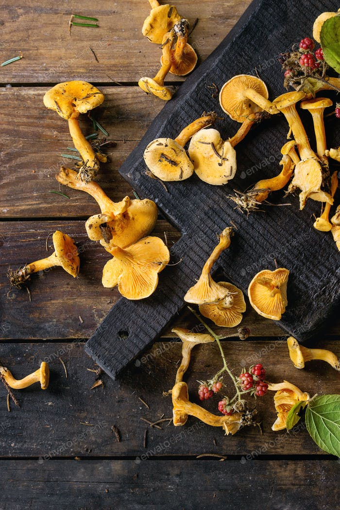 Forrest chanterelle mushrooms