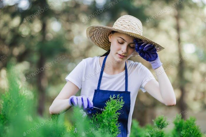 Frau benutzt Gartenwerkzeug, um Hecken zu trimmen und Büsche mit Gartenschere zu schneiden