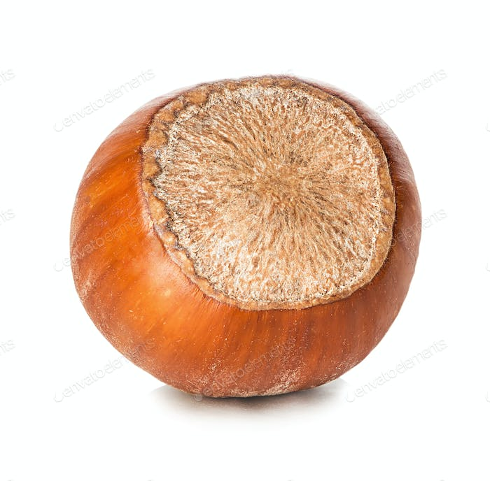 Hazelnut isolated on white background