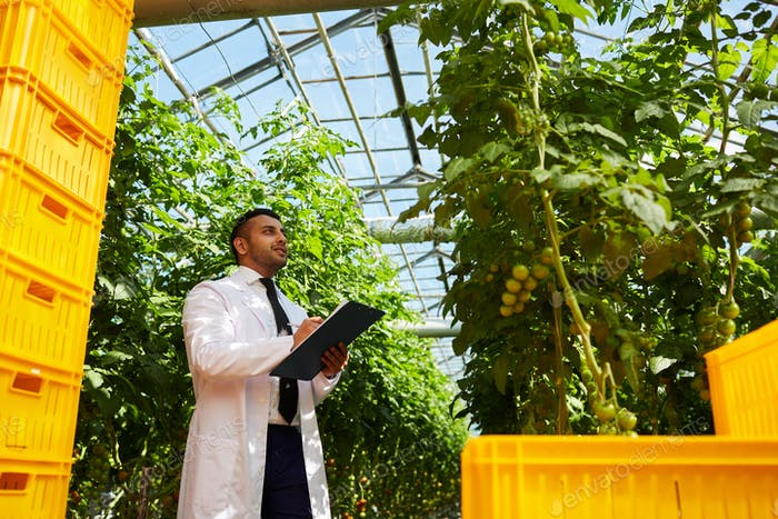 Agriculture scientist studying tomato plant