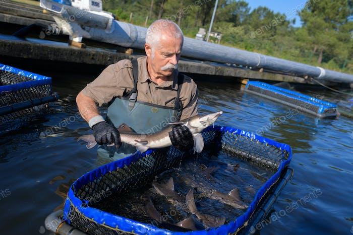 Messung der Fische