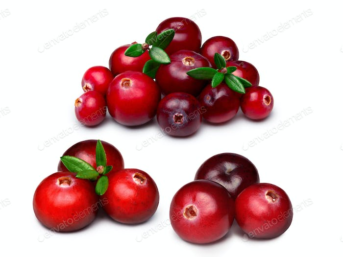 Wild cranberries isolated
