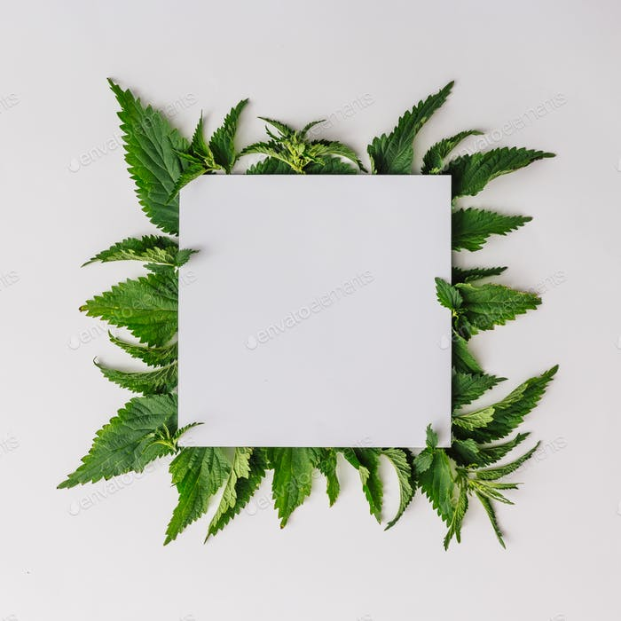 Creative nettle leaves layout with paper card note copy space. Minimal nature concept. Flat lay.
