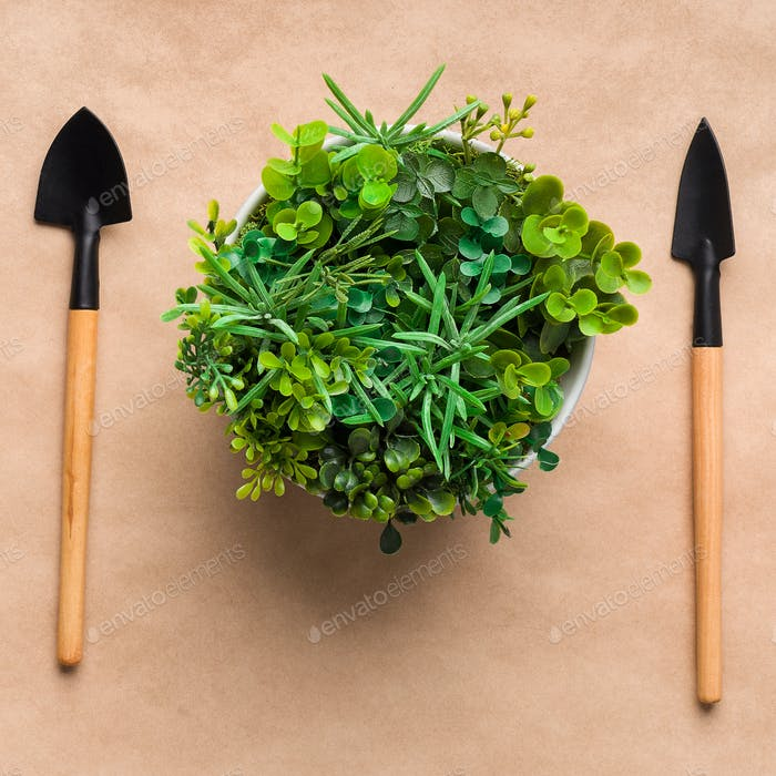 Plant transplantation. Mini gardening tools and plant, top view