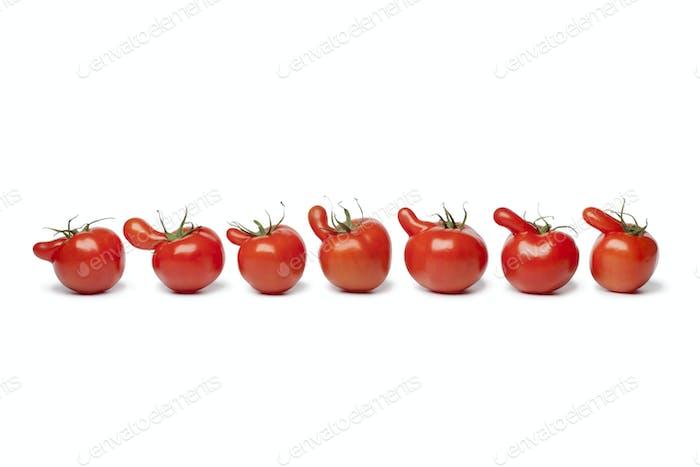Row of nosy tomatoes