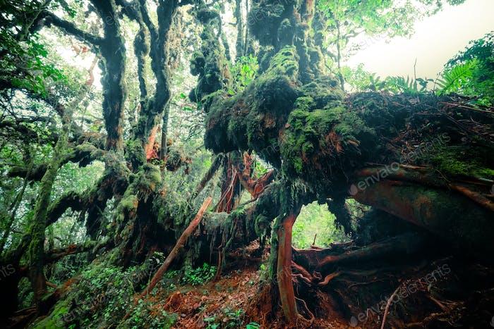 Misteriosa vegetación de selva tropical