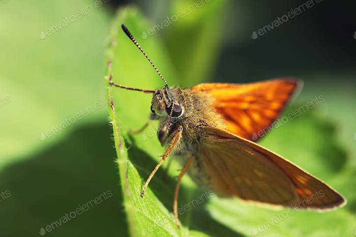 Macro view of vibrant butterfly of green leaf background