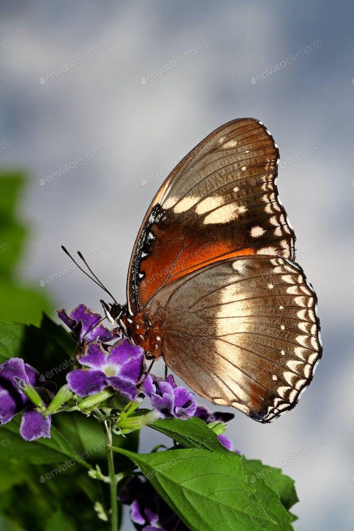 Feeding butterfly on a flower