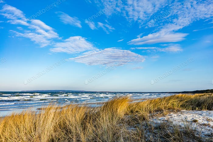 Baltic sea with golden dune grass
