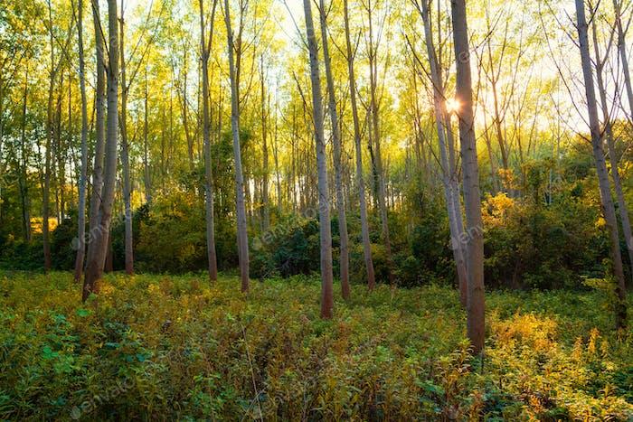 Bunte Herbstwaldszene