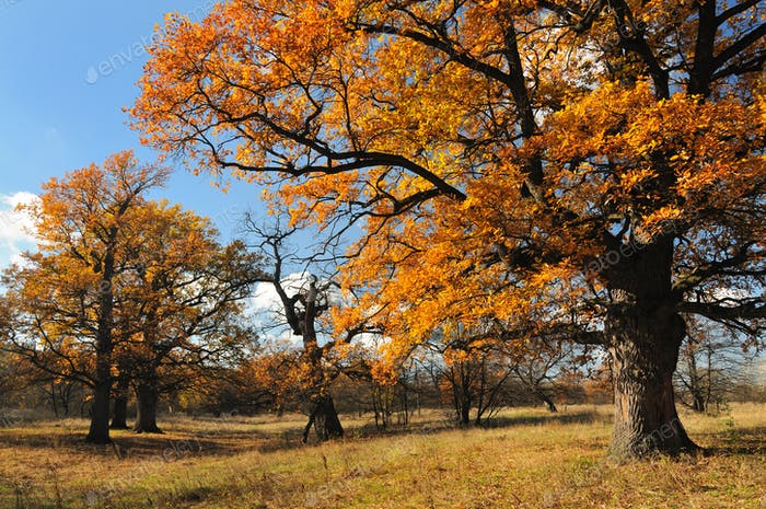 Beautiful autumn landscape of trees with leaves