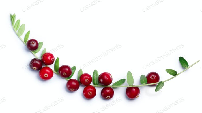 Cranberries branch with leaves, top view, paths