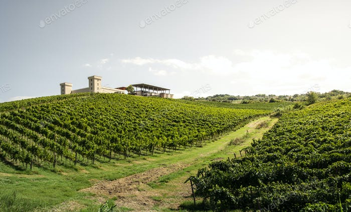 Winery on hill and vineyards rows. Winery building on top of the