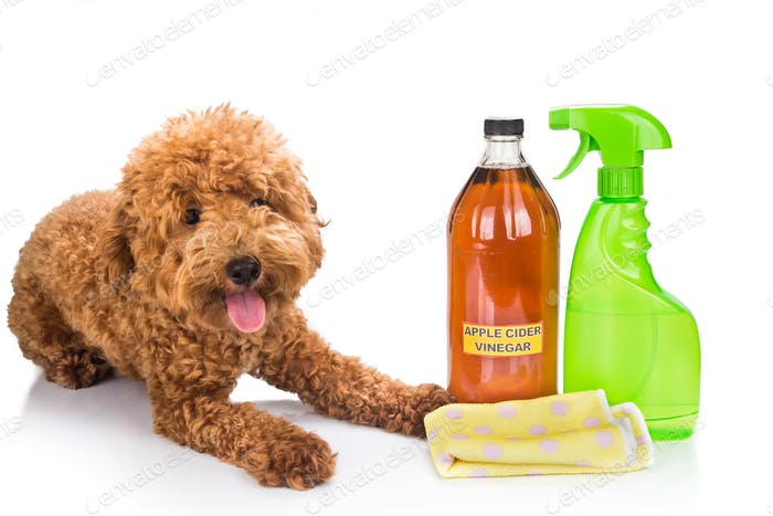 Apple cider vinegar effective as natural flea repellent and all