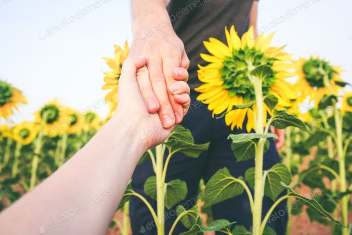 couple holding hands in a field of sunflowers