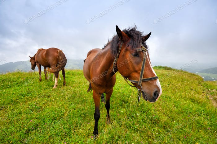 Horses on the meadow in the mountains. Foggy morning pasture