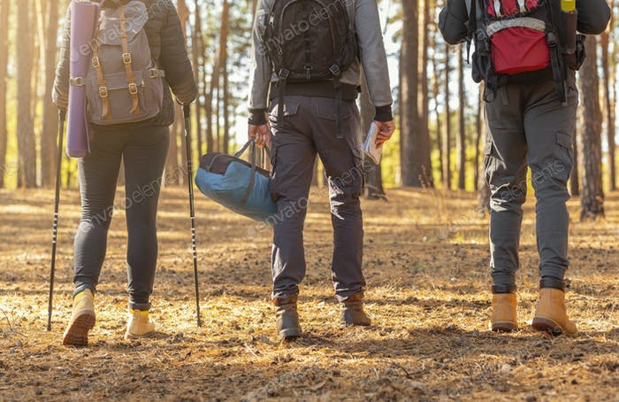 Cropped image of three hikers crossing forest in autumn