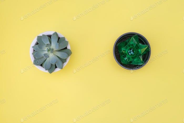 Ecology concept. Succulent and similar plastic flower.