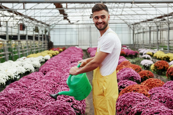 Photo of beautiful young guy in the greenhouse taking care of pink colored flowers