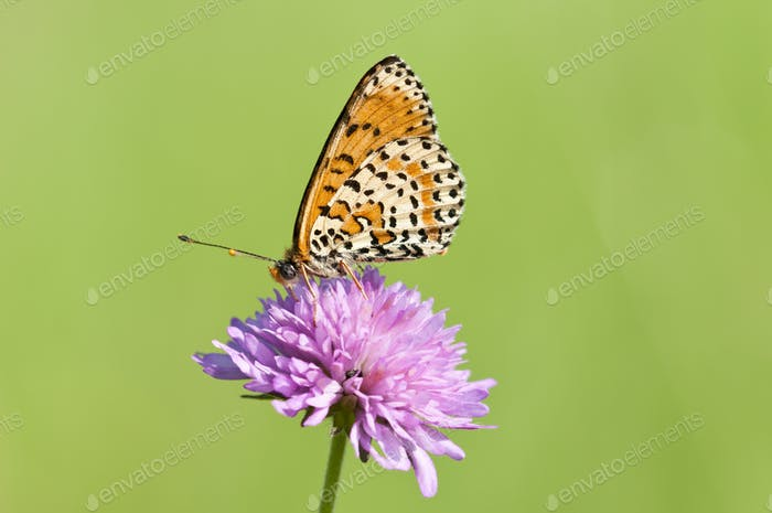 Btterfly on Pink Flower