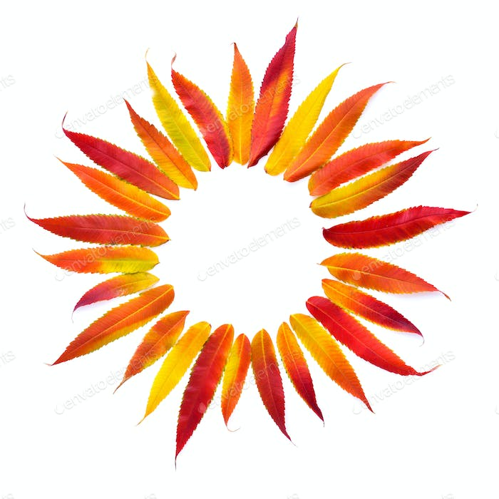 Autumn leaves in the form of the sun isolated on white backgroun