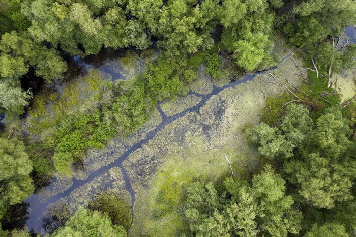 Marshlands pond and trees captured by drone from above