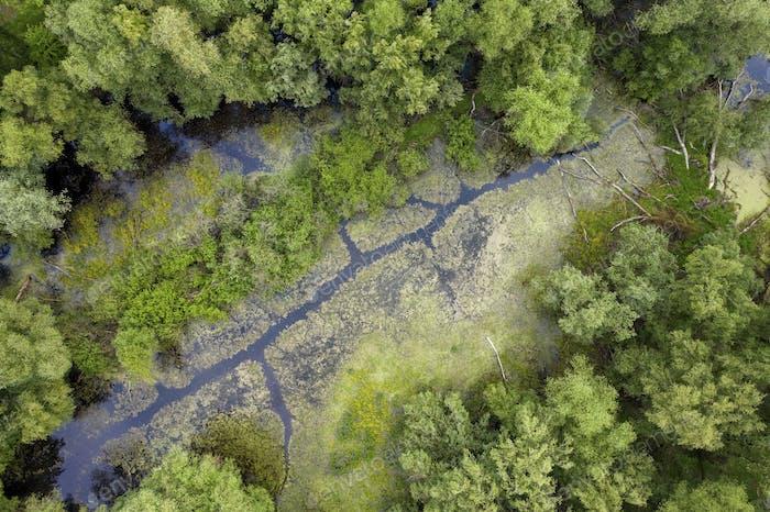 Marshlands Teich und Bäume von Drohne von oben gefangen genommen