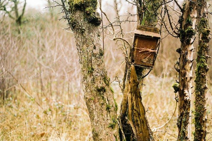 Bird box on an old tree trunk