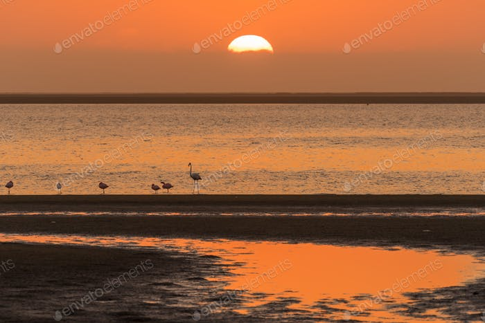Silhouettes of flamingos at sunset in Walvis Bay