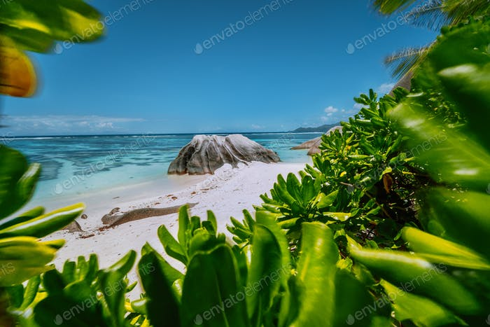 Anse Source d'Argent beach - beautifully shaped granite boulder framed by green leaves, La Digue