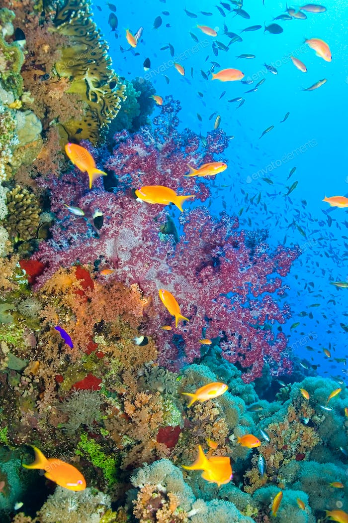 Coral Reef Underwater Landscape, Red Sea, Egypt